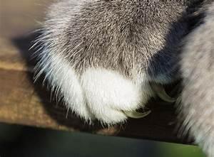 Katzen Fernhalten Von Möbeln : kratzverhalten wenn katzen an m beln kratzen zooroyal ~ Michelbontemps.com Haus und Dekorationen