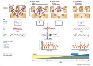 Cell Press: Trends in Neurosciences