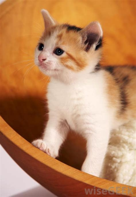 calico names female cat names calico images frompo