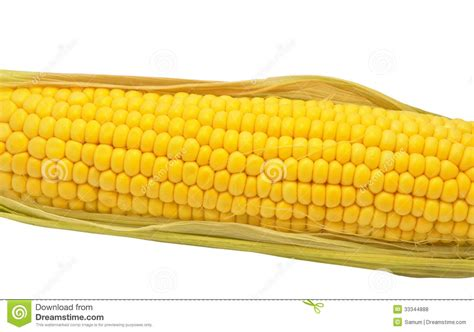 ear  corn stock photo image  husk ingredient food