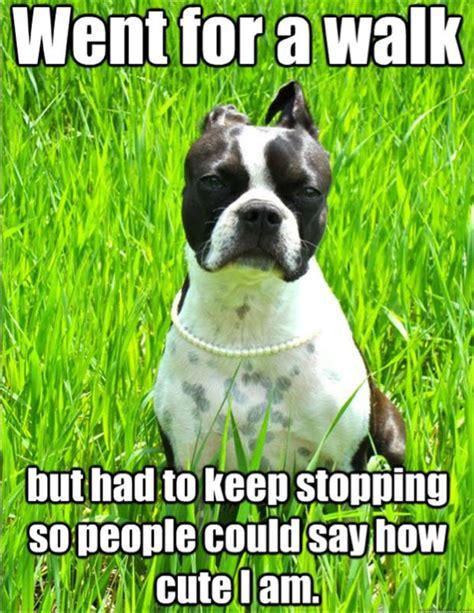 Dog Problems Meme - first world dog problems meme 19 dump a day
