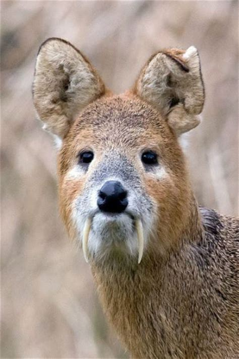 Best Scary Animals Ideas Pinterest Strange