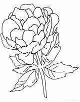 Coloring Peony Pages Raskraski Nature sketch template