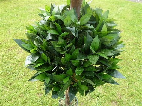 outdoor faux plants artificial plant 4 39 artificial bay tree in a pot 1
