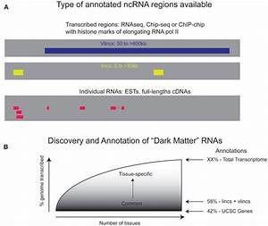 Frontiers   Dark Matter RNA: Existence, Function, and ...