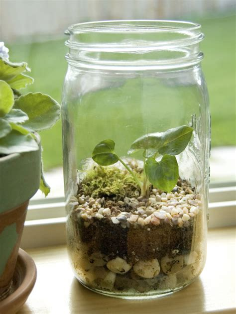 jar terrarium elegant nest terrariums