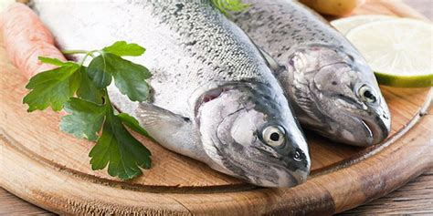 best fish to eat the best fish to eat for weight loss