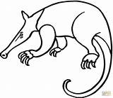 Anteater Coloring Pages Drawing Giant Aardvark Printable Anteaters Colouring Cliparts Clipart Adults Getcoloringpages Supercoloring Looking Food Clip Getdrawings Print Clipartbest sketch template