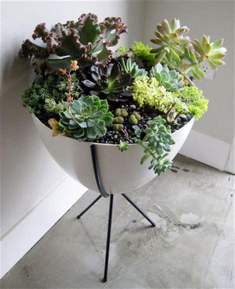 Zimmerpflanzen Im Retrolook