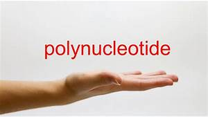 How To Pronounce Polynucleotide - American English