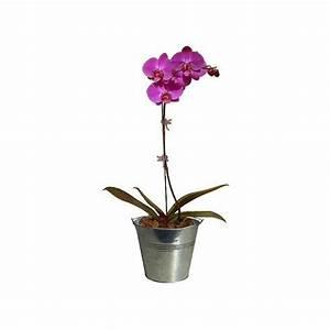 Cache Pot Orchidée : orchid e phalaenopsis rose cache pot livraison express plantes et jardins ~ Teatrodelosmanantiales.com Idées de Décoration