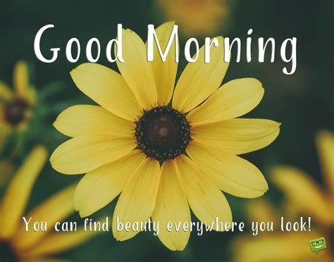 wake  seize  day positive good morning quotes