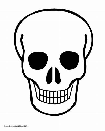 Skull Coloring Skulls Pages Colouring Halloween Drawing
