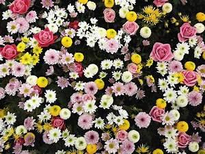 Tapis De Fleurs : photo gratuite fleurs texture tapis de fleurs image ~ Melissatoandfro.com Idées de Décoration