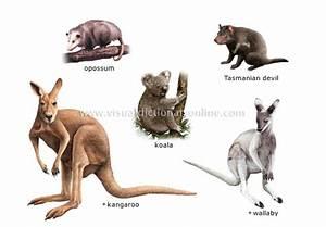 MAshooq: Marsupials