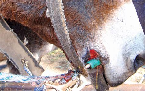 donkey healthy keep farm health livestock