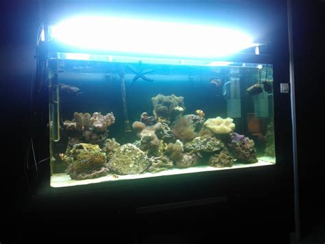 aquarium osaka 320 eau de mer