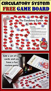 Student  Circulatory System And Doors On Pinterest