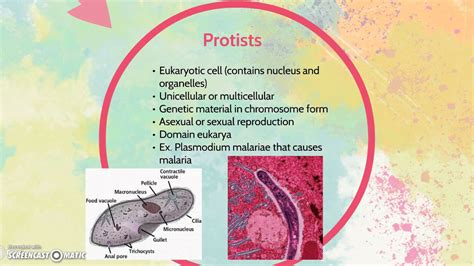 differences  bacteria  protists youtube