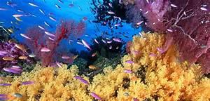 Fische Für Anfänger : guppys sinf die idealen aquariumfische f r den anf nger aquarium fische ~ Orissabook.com Haus und Dekorationen