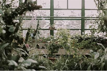 Greenhouse Plant Plants Winter Unsplash Militaru Eduard