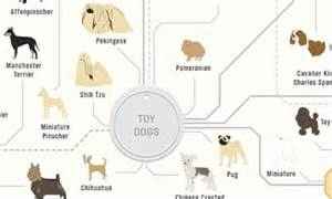 The family tree of DOGS: Infographic reveals how every ...
