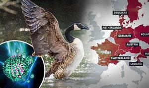 Bird Flu Outbreak Mapped  Avian Influenza Spreads Across