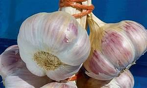 Planter Ail Rose : autumn garlic l 39 ail d 39 automne jardin perdu ~ Nature-et-papiers.com Idées de Décoration