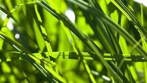 Pflanze Mit Z : a z pflanzen pflanzen natur planet wissen ~ Lizthompson.info Haus und Dekorationen