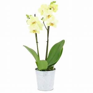 Offrir une orchidee a une femme daiitcom for Affiche chambre bébé avec offrir des fleurs par internet pas cher