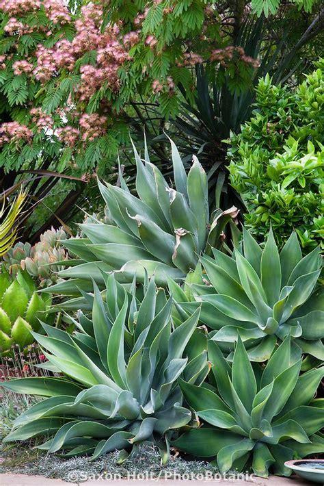 succulents agave pin by pepe corgi on agave aloe pinterest