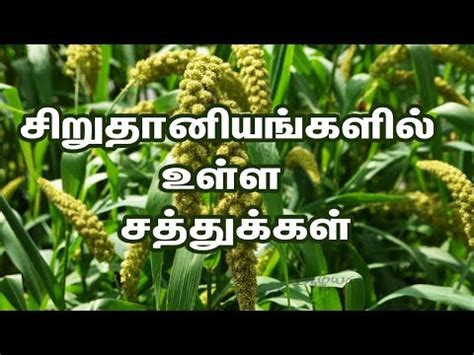 This food is beyond comparison to western countries' food. Health Benefits of Millets in Tamil - Aazhiya