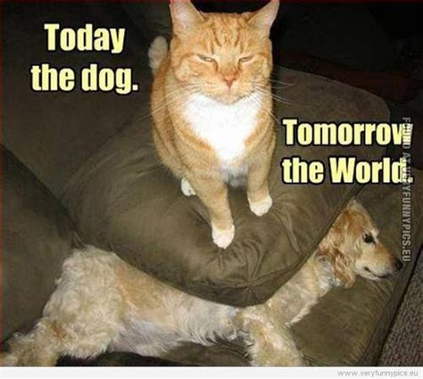 Funny Cats  Best Funniest Cat Quotes  Quotes And Humor