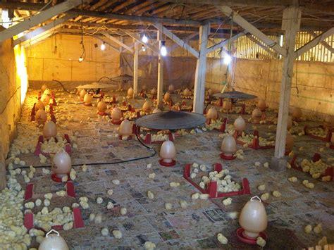 rumah dijual murah tanah dijual jual tanah murah 6 kandang ayam