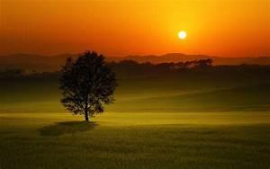 Beautiful Evening Sunset HD #Wallpaper