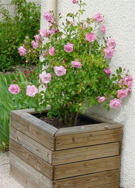 roses du jardin le jardin de marguerite
