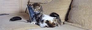 Coussin Tete De Lit Gifi : canap petit chat photos de chats ~ Dailycaller-alerts.com Idées de Décoration