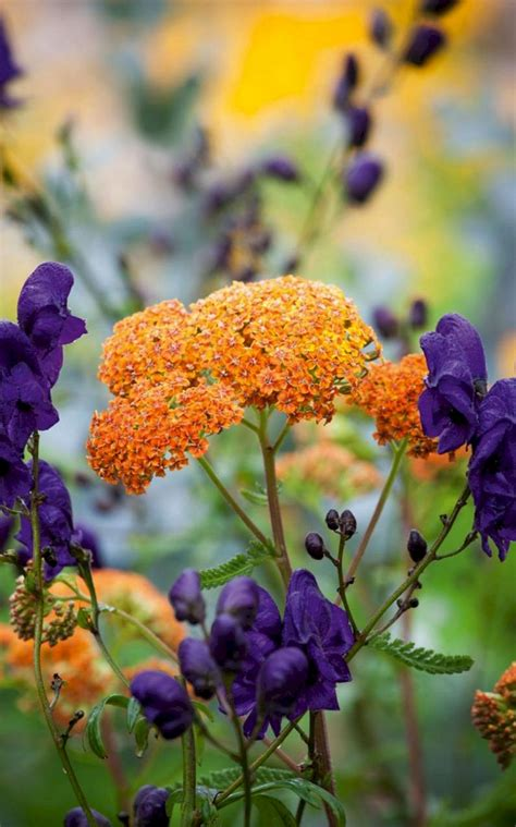 My Favorite Plant Combinations 33 (my Favorite Plant