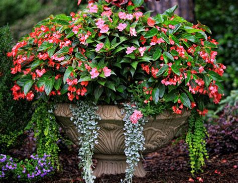 Best Flower Combinations For Containers