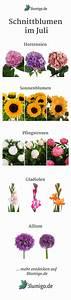 Welche Blumen Kann Man Essen : welche blumen gibt es im juli schnittblumen saison ~ Watch28wear.com Haus und Dekorationen