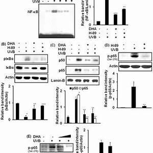 (PDF) Docosahexaenoic acid inhibits UVB-induced activation ...