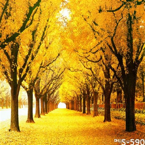 Fall Backgrounds Yellow by 2019 5x7ft Vinyl Autumn Fall Yellow Tree Photography