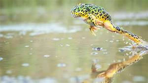 What Jumping Frogs Teach Us about Communicating | LeapFrog ...