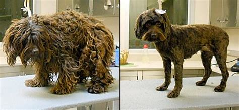 matted fur calgary dog daycare training grooming