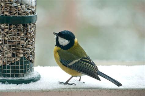 winter bird feeding wild bird feeders