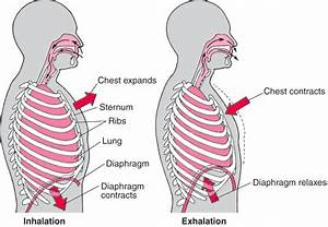 Normal Lung Function  U00bb Pediatric Pulmonary Division