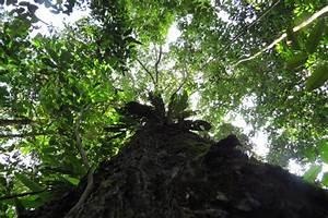 Amazon's vast rainforest dominated by few tree species