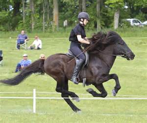 Blessi ngs--Life with an Icelandic Horse: Gaits of the ...