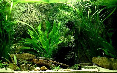 water plants for aquarium background aquarium plant background desktops pics
