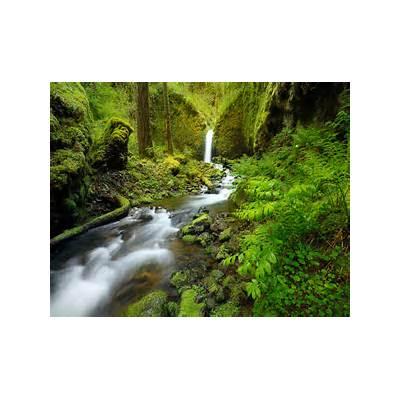 Fern Gully : Columbia River Gorge Oregon Florida Nature